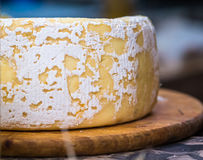 Piece of hard cheese Royalty Free Stock Image