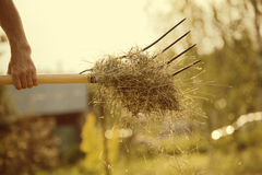Piece of hay Stock Images