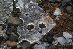 Strangely shaped piece of ice resembling a snake s head royalty free stock image