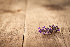 Piece of Lavender Royalty Free Stock Photos
