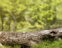 Piece of log wood in the forest on green grass. stock photo