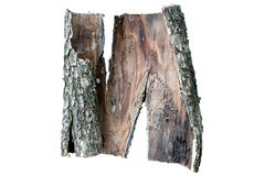 Piece of oak's bark Stock Photo