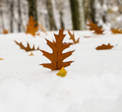 A piece of oak in the snow. In the park Royalty Free Stock Photography