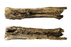 Piece Of Tree Trunk