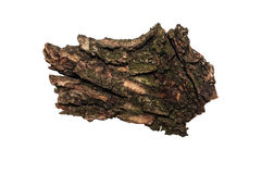 Piece of old bark or rind Stock Photo