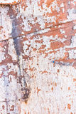 Piece of old painted boat Stock Photo