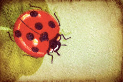 Vintage ladybug on the clover leaf Stock Photo