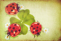 Vintage ladybugs on the clover leaf Royalty Free Stock Photo