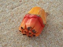 Piece of orange coconut. Marco photo, piece of orange coconut on the sand royalty free stock photo