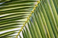 A piece of palm tree in the sun  Stock Photo