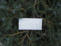 A piece of paper against the background of fir branches. Rectangular sheet of paper on a background of fir branches stock photos
