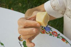 A piece of parmesan cheese in the hand of an old woman Royalty Free Stock Photos