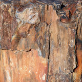 A piece of petrified wood Stock Photo