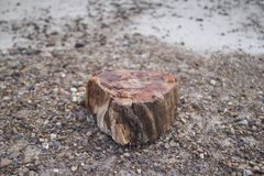 A piece of petrified wood royalty free stock photos