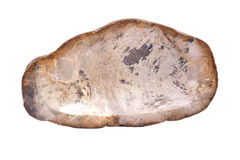 Piece of petrified wood Stock Photos