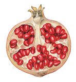 Piece of Pomegranate Stock Photography