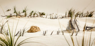 Piece of rock on sand dunes royalty free stock photos