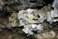 A piece of rock, a stone close up. A piece of rock, a stone close-up, somewhere in the bottom of the gorge Stock Photography