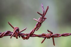 Piece of rusted barbed wire stock photo