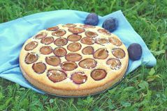 Piece of summer cake with plums on blue cloth on grass. Front horizontal view Royalty Free Stock Image