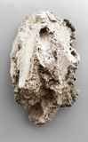 Piece of travertine rock. Over grey background. Sedimentary rock coming from Malaga mountains, Spain stock photos