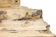 Piece of tree bark, on white. Piece of tree bark,  on white background Royalty Free Stock Photo