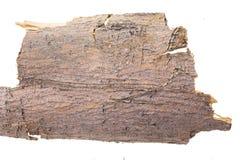 Piece of tree bark, on white. Piece of tree bark, isolated on white background Stock Image