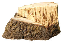 Piece of tree trunk Stock Photos