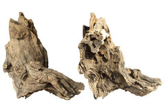 Piece of tree trunk Stock Image