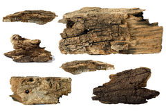 Piece of tree trunk Royalty Free Stock Photo