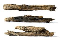 Piece of tree trunk Stock Photos