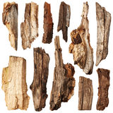 Piece of trunk. Set Stock Photography