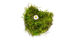 Piece of turf and moss in heart shape with a daisy isolated on w Royalty Free Stock Image