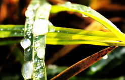 Piece of water. Drop of morning dew on grass Royalty Free Stock Photography