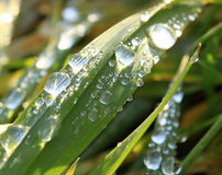Piece of water. Drop of morning dew on grass Stock Photography