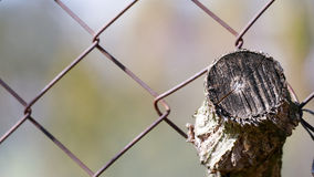 A piece of wood located in the old rusty fence Stock Photo