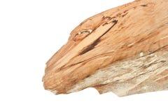 Piece of wood look like dragon head. Stock Photos