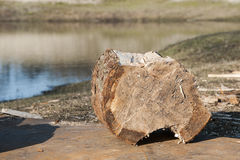 Piece of wood near the water Royalty Free Stock Images