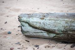 Piece of wood on sand. Dry piece of wood on sand Royalty Free Stock Image