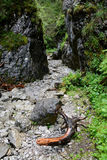 Piece of wood and stones in narrow ravine. Piece of wood and stones in narrow rocky ravine. Krakow Ravine in Tatra mountains in Poland Royalty Free Stock Photo