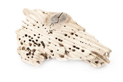 Piece of wood with termite holes. Royalty Free Stock Photography
