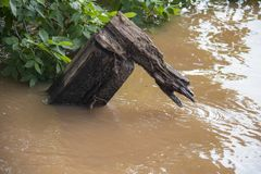 Piece of wood torn off and caught up in trees in badly flooded area with flood waters swirling around it - close-up.  royalty free stock photo