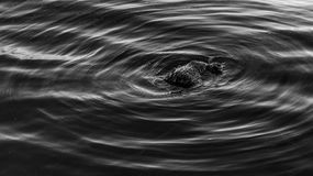 A piece of wood in the water. With waves Royalty Free Stock Image