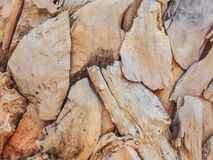 Pieces of beach driftwood Stock Photography