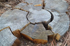 Pieces of broken tree ring. Fitted together like a puzzle Royalty Free Stock Photo