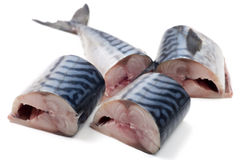 Pieces of chopped mackerel Royalty Free Stock Image