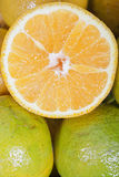 Pieces of citrus fruits Royalty Free Stock Photography
