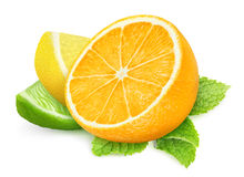 Pieces of citrus fruits Stock Photography