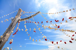 Pieces of coral hanging on a tree against blue sky Stock Image