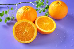 Cut Half of Fresh Navel Orange Royalty Free Stock Photo